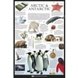 Ace Framing in.Arctic & Antarctic Dorling Kindersleyin. Framed Poster, 36in. x 24in.
