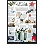 "Ace Framing ""Arctic & Antarctic Dorling Kindersley"" Framed Poster, 36"" x 24"""