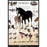 Pyramid America™ Horses Dorling Kindersley Poster