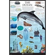 Pyramid America™ Ocean - Dorling Kindersley Poster
