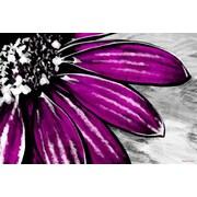 Maxwell Dickson Purple Petals Painting Print on Canvas; 18'' H x 24'' W