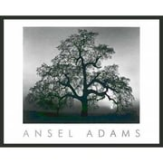 Frames By Mail 'Oak Tree Sunset' by Ansel Adams Framed Photographic Print