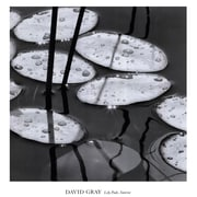 Evive Designs Lily Pads, Sunrise by David Gray Photographic Print