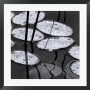 Evive Designs Lily Pads, Sunrise by David Gray Framed Photographic Print