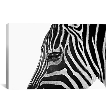 iCanvas 'Ignoring Zebra' by Bob Larson Photographic Print on Canvas; 12'' H x 18'' W x 1.5'' D