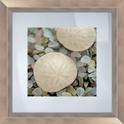 PTM Images Sea Glass Sand Dollar Framed Photographic Print