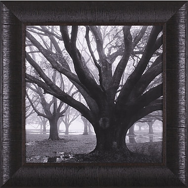 Art Effects Oak Grove, Winter by William Guion Framed Photographic Print