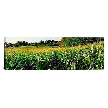 iCanvas Panoramic Cornfield Maryland Photographic Print on Canvas; 16'' H x 48'' W x 0.75'' D