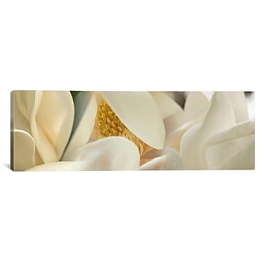 iCanvas Panoramic Magnolia Heaven Flowers Photographic Print on Canvas; 20'' H x 60'' W x 1.5'' D
