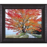 Art Effects Wild Red Maple and Fog, New Hampshire by Christopher Burkett Framed Photographic Print