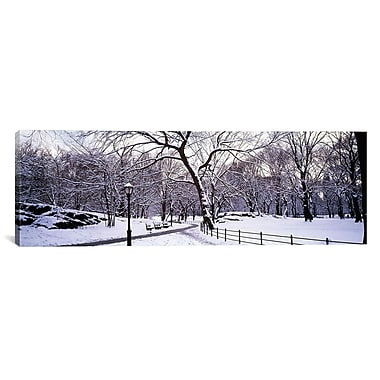 iCanvas Panoramic Bare Trees Photographic Print on Canvas; 12'' H x 36'' W x 1.5'' D