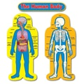 Carson Dellosa® Bulletin Board Set, Child-Size Human Body