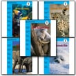 Riverstream Publishing Riverstream Readers Level 1 Book Bundle