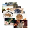 Stages Learning Materials® Pets Poster Set