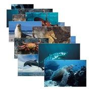 "Stages Learning Materials® 14"" x 19"" Sea Life Poster Set, Grades Pre-School"