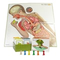 American Educational Products Body IQ® Nutrition Board Game