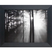 Artistic Reflections Light through the Trees I Framed Photographic Print