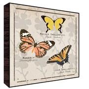Green Leaf Art Butterflies I Wall Art; 12'' H x 12'' W x 1.5'' D