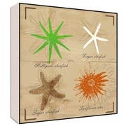 Green Leaf Art Sea Stars II Wall Art; 24'' H x 24'' W x 1.5'' D