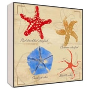 Green Leaf Art Sea Stars I Wall Art; 12'' H x 12'' W x 1.5'' D