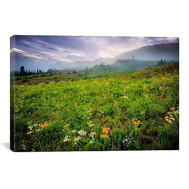 iCanvas 'Colorado Flowers' by Dan Ballard Photographic Print on Canvas; 8'' H x 12'' W x 0.75'' D