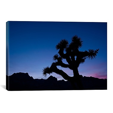 iCanvas 'Desert Silence' by Dan Ballard Photographic Print on Canvas; 26'' H x 40'' W x 0.75'' D