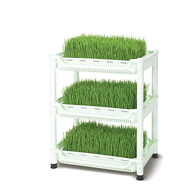 Tribest Small Deluxe Soil-Free Wheatgrass Grower