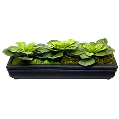 Creative Branch Faux Echeveria Pave Desk Top Plant