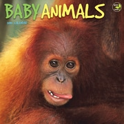 TF Publishing Baby Animals 2015 Wall Calendar
