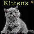 TF Publishing in.Kittensin. 2015 Wall Calendar
