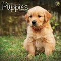 TF Publishing in.Puppiesin. 2015 Wall Calendar
