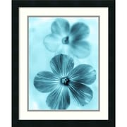 """Amanti Art """"Forget Me Not Blue I"""" Framed Art by Teton Parchment"""