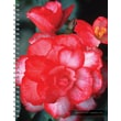 TF Publishing in.Flowersin. 2015 16 Month Spiral Planner