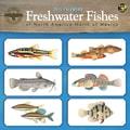 TF Publishing in.Freshwater Fishesin. 2015 Wall Calendar
