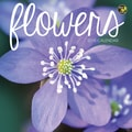 TF Publishing in.Flowersin. 2015 Mini Calendar