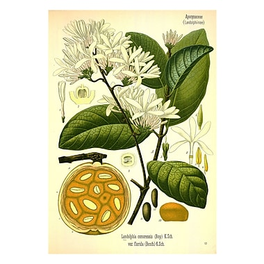 Evive Designs Vintage Botanical VII by Julia Kearney Painting Print