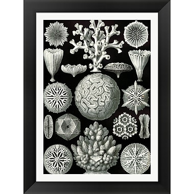 Evive Designs Vintage Seashells I by Julia Kearney Framed Graphic Art