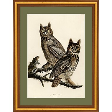 Evive Designs 'Great Horned Owl' by Julia Kearney Framed Painting Print