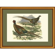 Evive Designs Bohemian Pheasant by Vision Studio Framed Painting Print