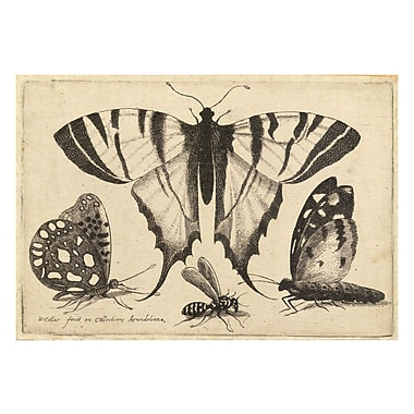 Evive Designs Vintage Butterfly IV by Julia Kearney Painting Print