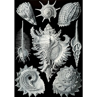 Evive Designs Vintage Seashells II by Julia Kearney Graphic Art