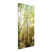 """Trademark Ariane Moshayedi """"Muir Woods"""" Multi Panel Art Set Part 3, 16"""" x 34"""""""