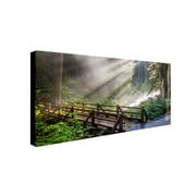 Trademark Pierre Leclerc Forest Sunlight Gallery-Wrapped Canvas Art, 16 x 32