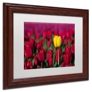 "Trademark Pierre Leclerc ""Yellow Tulip"" Art, White Matte W/Wood Frame, 11"" x 14"""