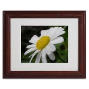 "Trademark Monica Fleet ""Dynamic Beauty"" Art, White Matte W/Wood Frame, 11"" x 14"""