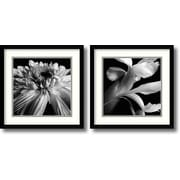 Amanti Art 'Silver Blossoms' by Elise Remender 2 Piece Framed Photographic Print Set
