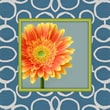 Obvious Place Tangerine Flower Photographic Print on Canvas in Multi Colors