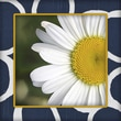 Obvious Place Modern Abstract Daisies Horizontal Left Photographic Print on Canvas in Blue and White