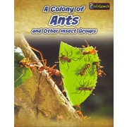 A Colony of Ants: and Other Insect Groups (Animals in Groups)