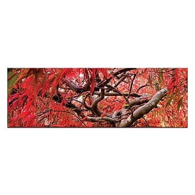 Artist Lane Japanese Maple by Andrew Brown Photographic Print on Canvas